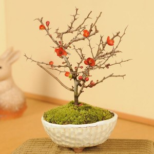 y-bonsai_my0350